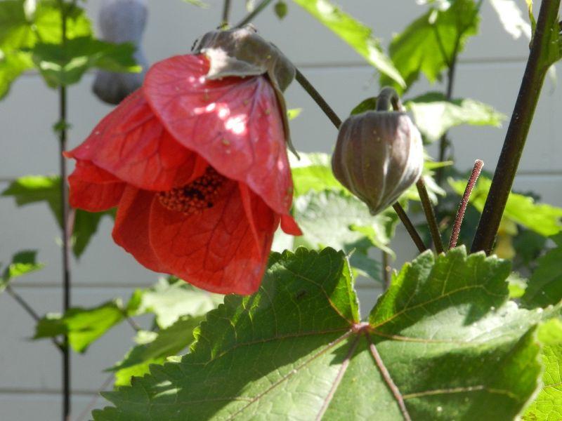 100687-Red Flower