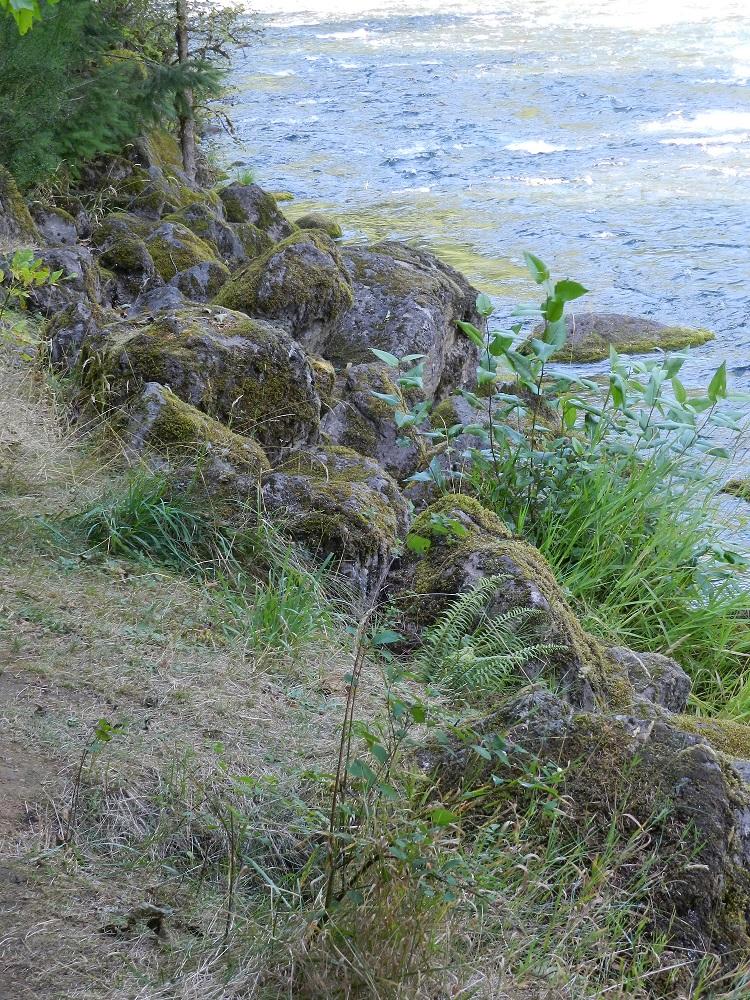 100738-River's edge 1