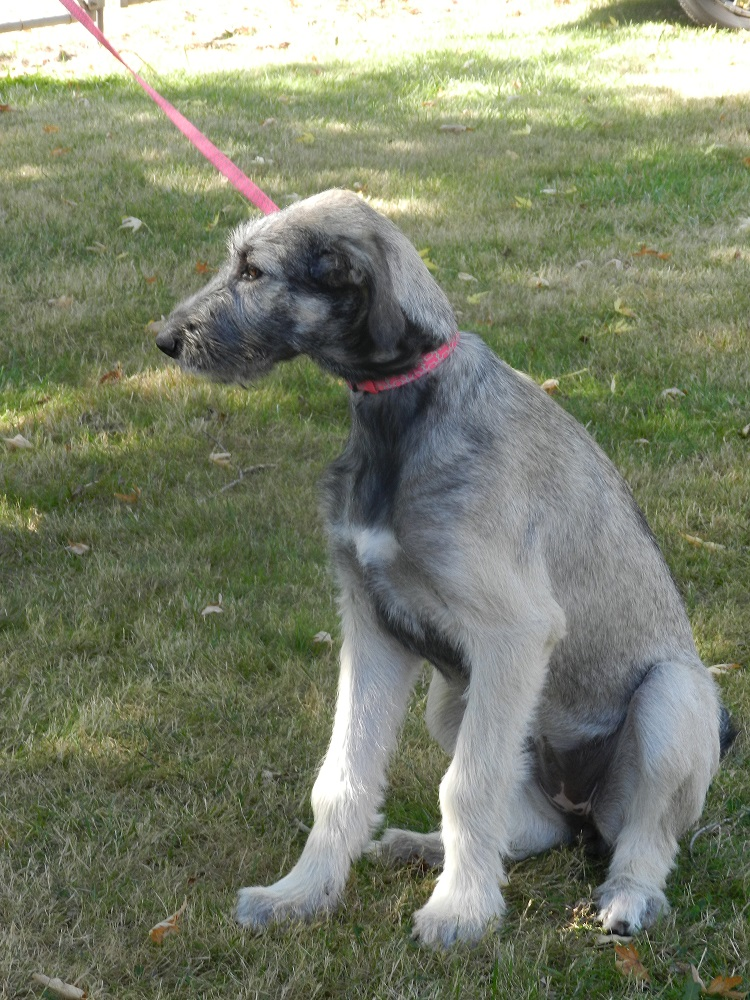 1000276-4 month puppy