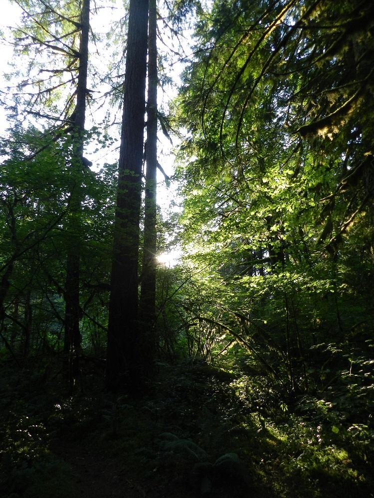 100746-Goodnight sun, goodnight trees
