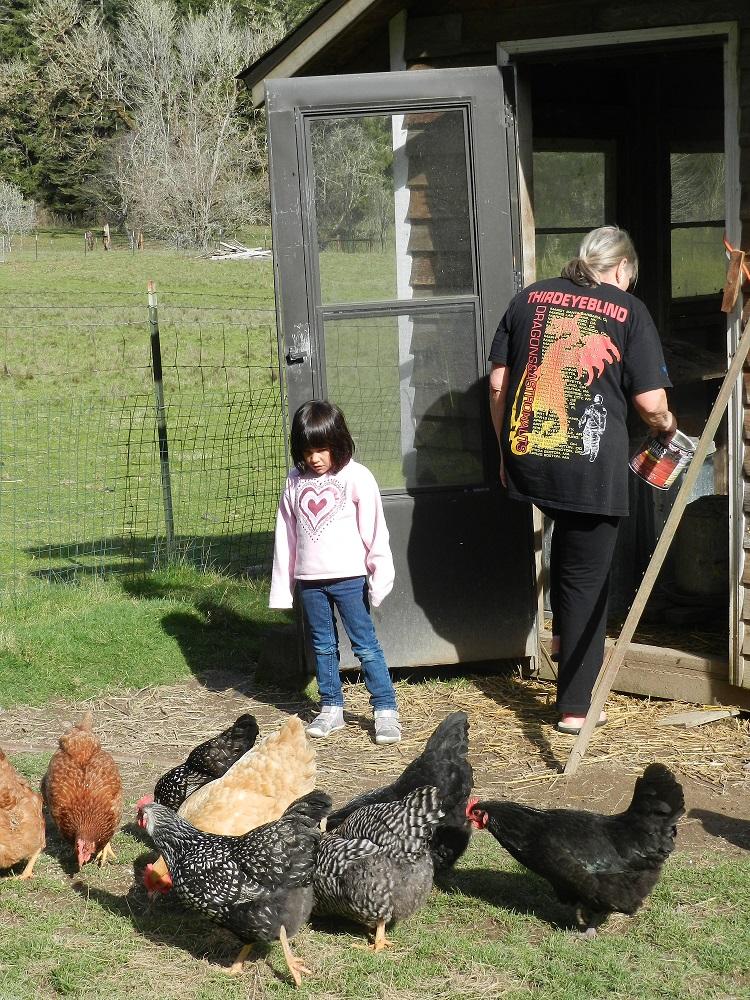 100056-Chickens1