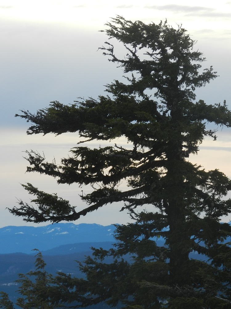 100024-Lone Pine
