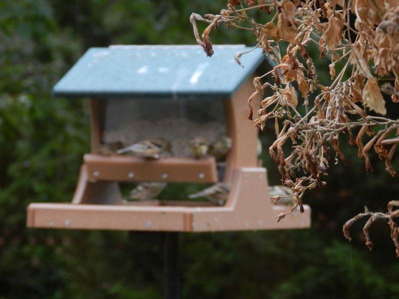 1000262-Little house feeder